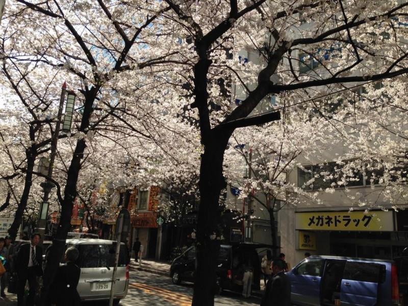 桜便り Vol.4 東京   日本橋