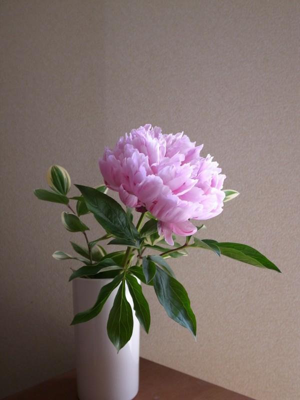 お花のある生活。芍薬を活ける