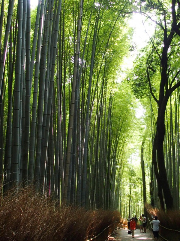 宿坊へ泊まろう! 京都への旅 Vol.9 嵐山観光 嵐電に乗る