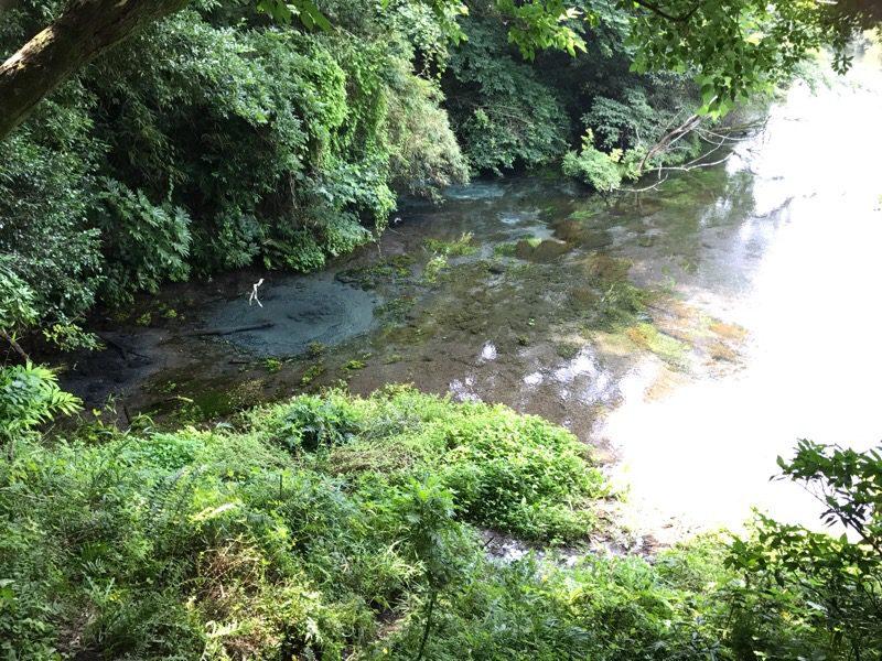 三島 柿田川湧水群:富士山の湧水を五感で楽しめる公園